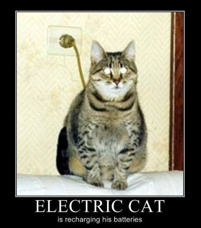 2-electrical-cat
