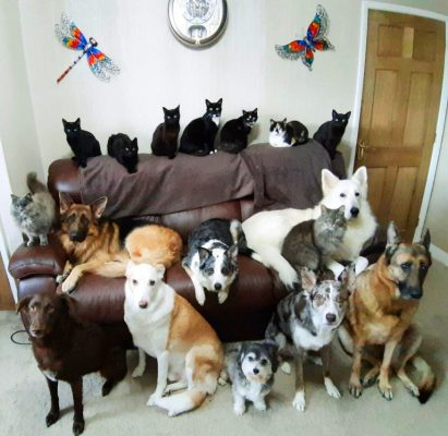 8 dogs and 9 cats in photo